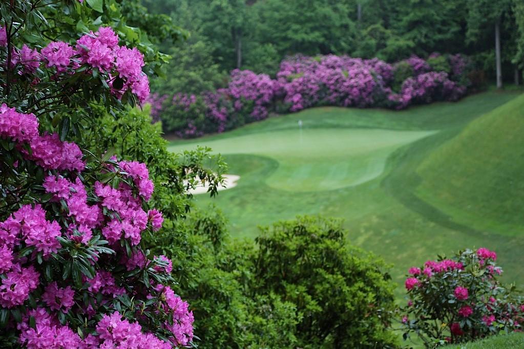 azaleas at Champion Hills